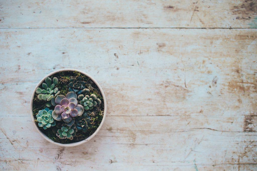 vaso de rosa-de-pedra