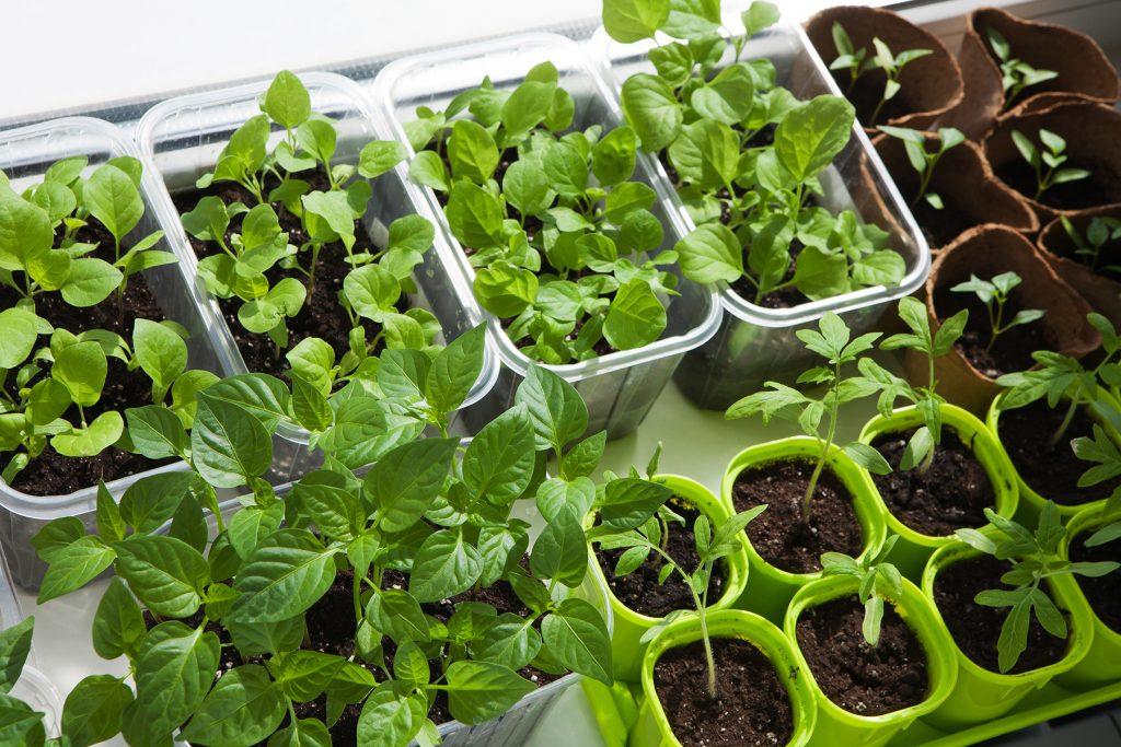 Tenha uma horta no seu apartamento